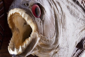 How many Passion Piranhas are on your checklist?